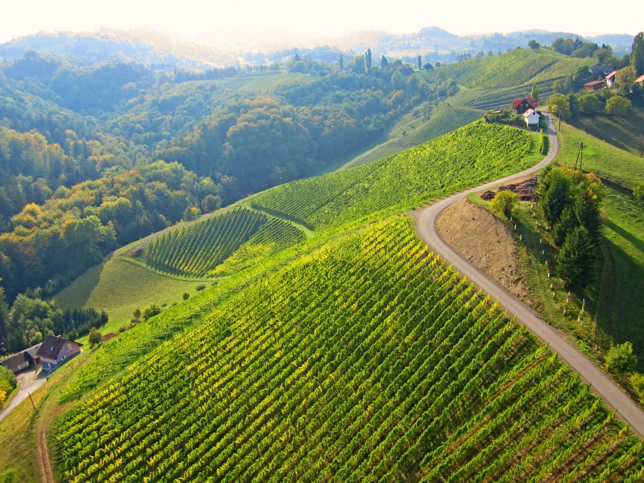 Österreich, Wein, Sabathi