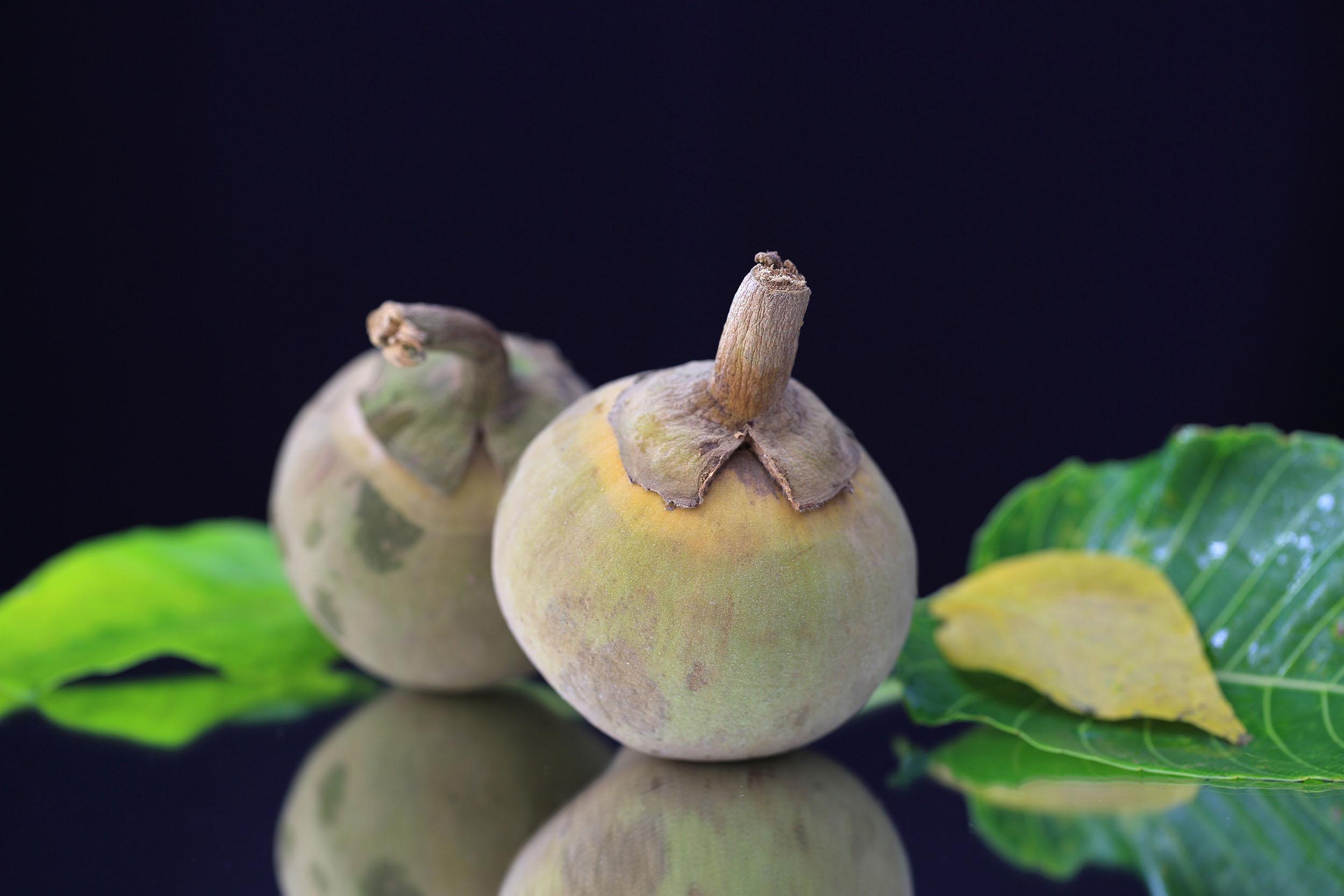 Sapote, Frucht aus Süd- und Zentralamerika mit Schokoladen-ähnlichem Geschmack