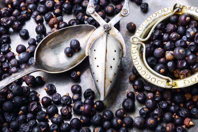 Sammlung frischer Wacholder Beeren