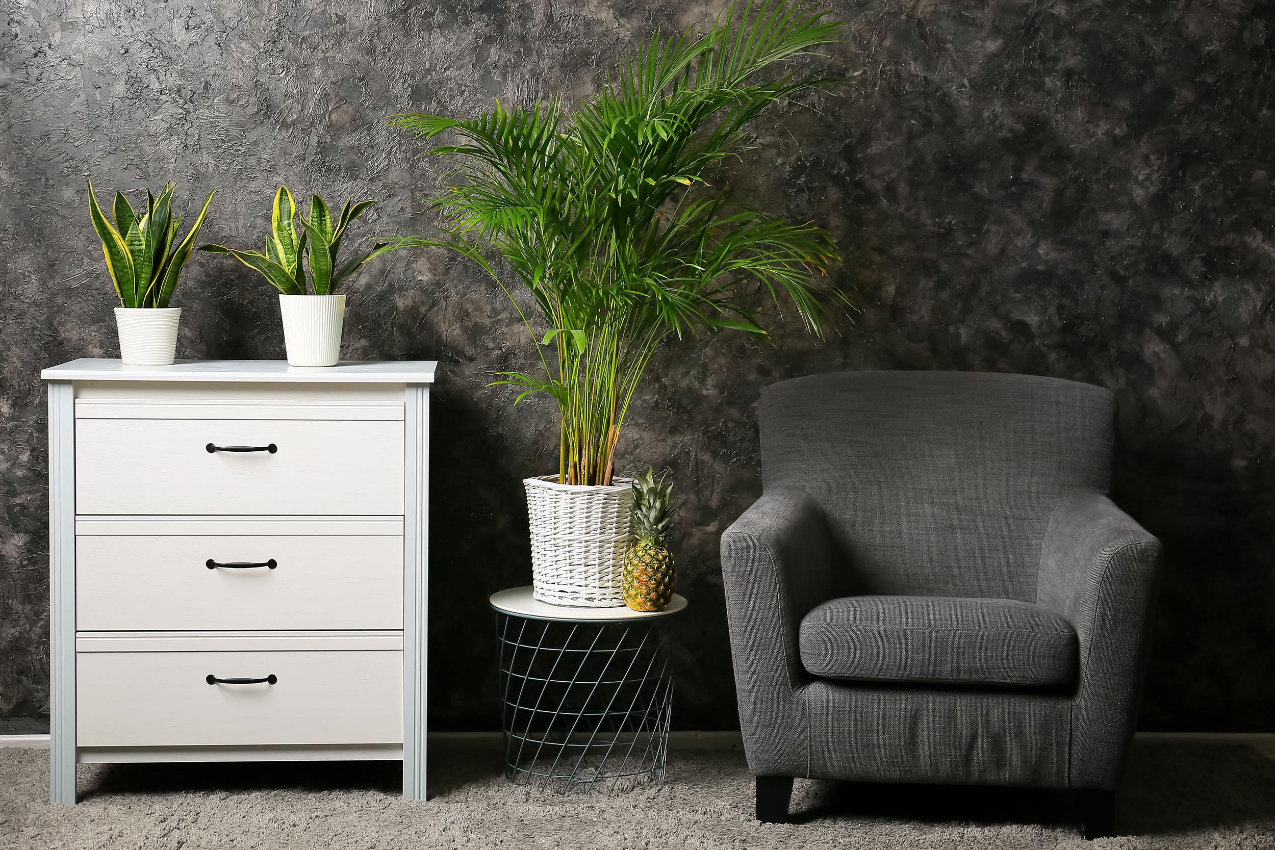 Zimmerpflanze in einem modernen Raum mit Sessel