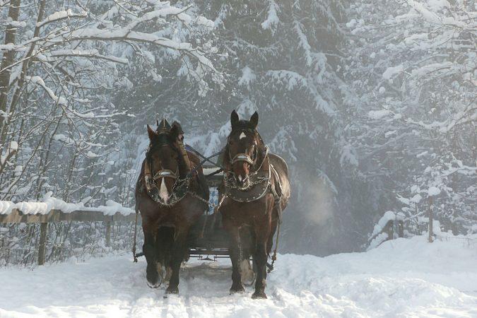 Winterliche Fahrt mit Pferden