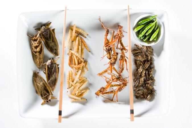 Frittierte Insekten auf einem Teller