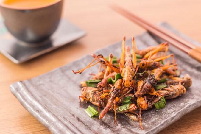Krosse Insekten auf einem Teller