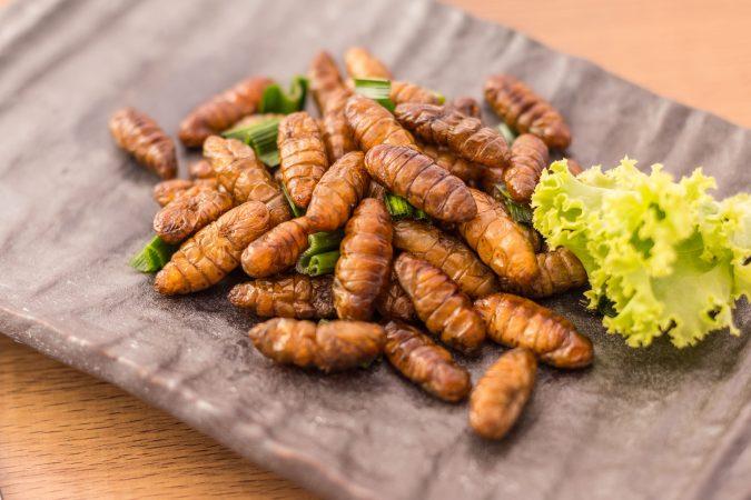 Holzwurm-Insekten gebraten auf einem Teller