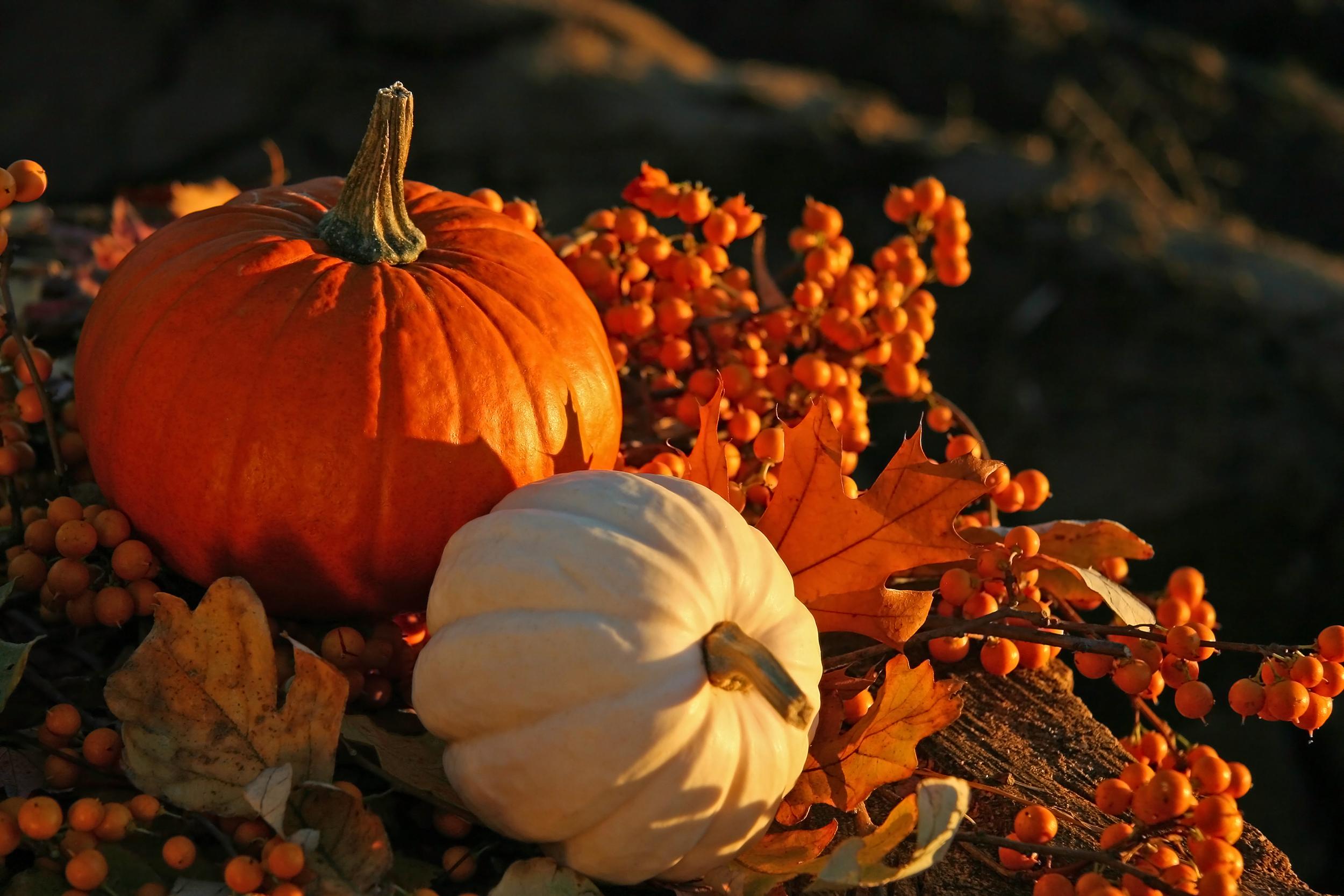 Herbstliche Farben mit Kürbissen und Zweigen